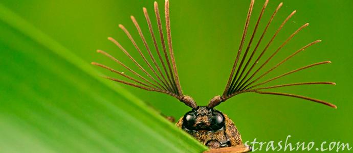 страшные насекомые планеты