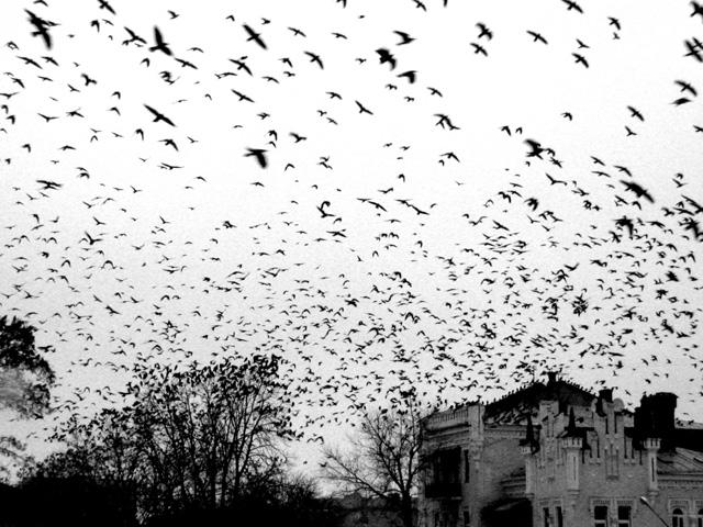 вороны кружат над домом колдуна в Полтаве