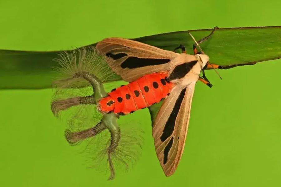 необычный жук