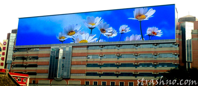 светодиодный экран с цветами