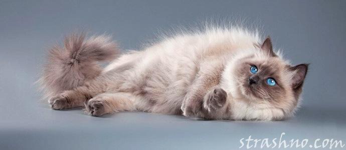 история о маскарадной кошке