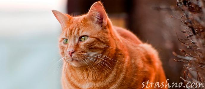 мистическая история про кота