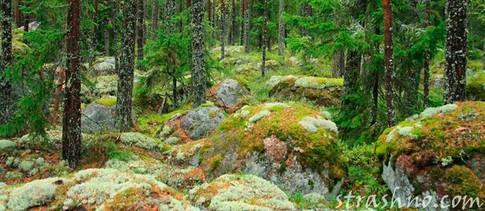 мистика Карельского леса