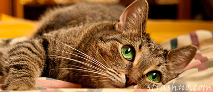 кошка спасла жизнь