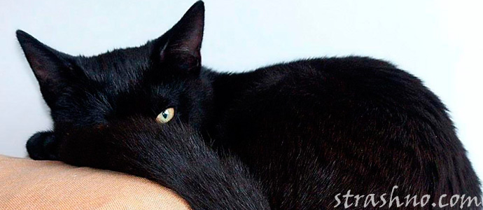 мистика черного кота