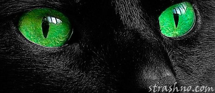 зеленые глаза черного кота