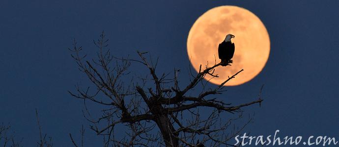мистика полной Луны