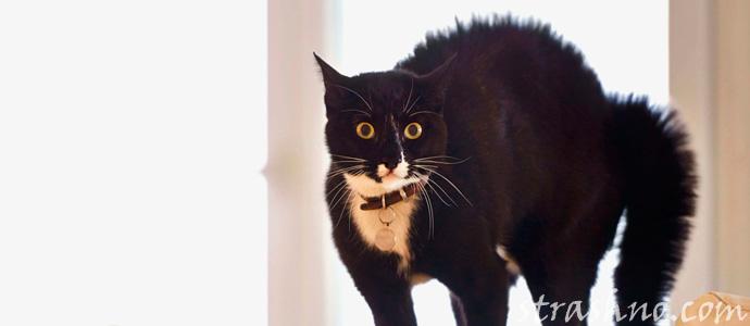 кошка испугалась домового
