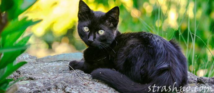 мистика с черной кошкой