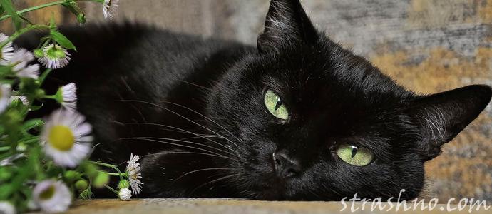 черный кот ведьмы