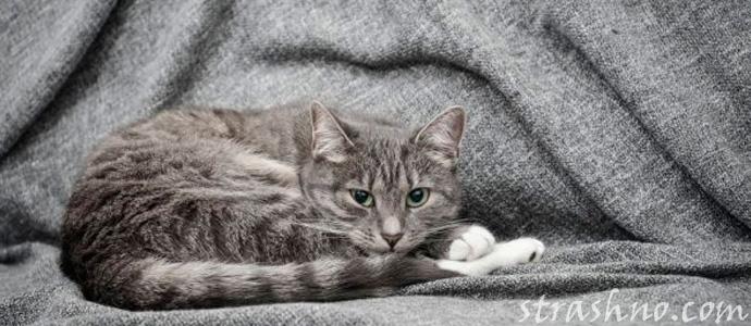 мистическое воскрешение кота