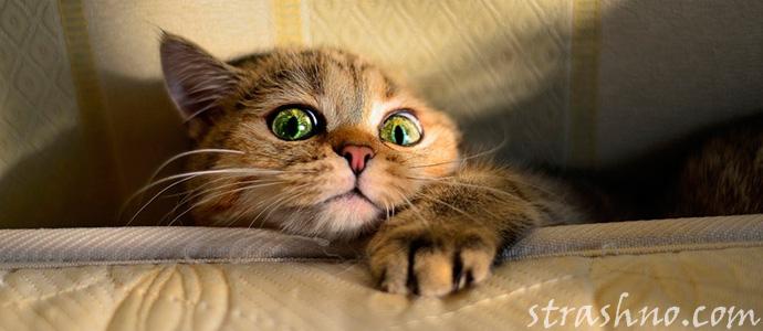 кот испугался домового