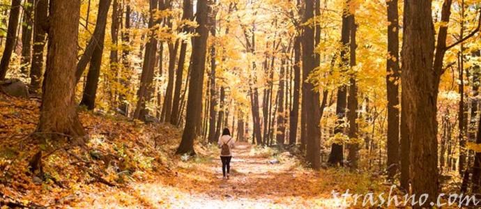 странная встреча в осеннем лесу