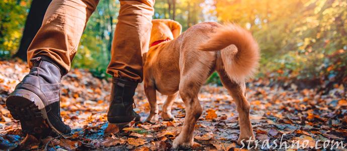 мистическая прогулка с собакой