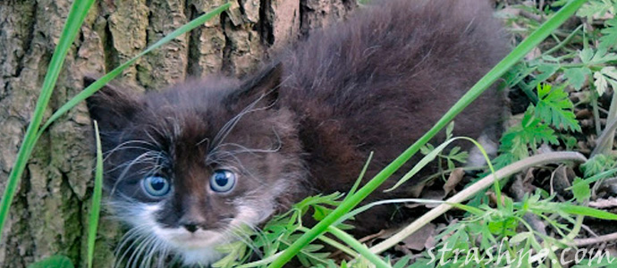 мистика с подобранным котенком