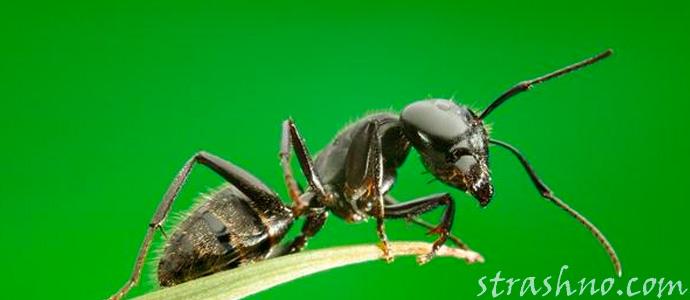муравьи поселись на могиле
