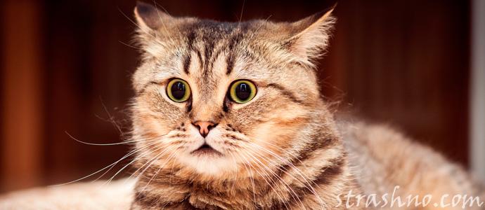 удивленный кот увидел душу умершего хозяина