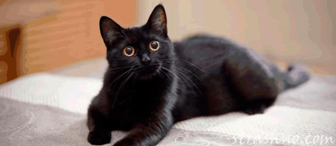 кошка прогнала домового