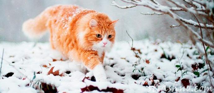 сбежавший кот нашел свой дом